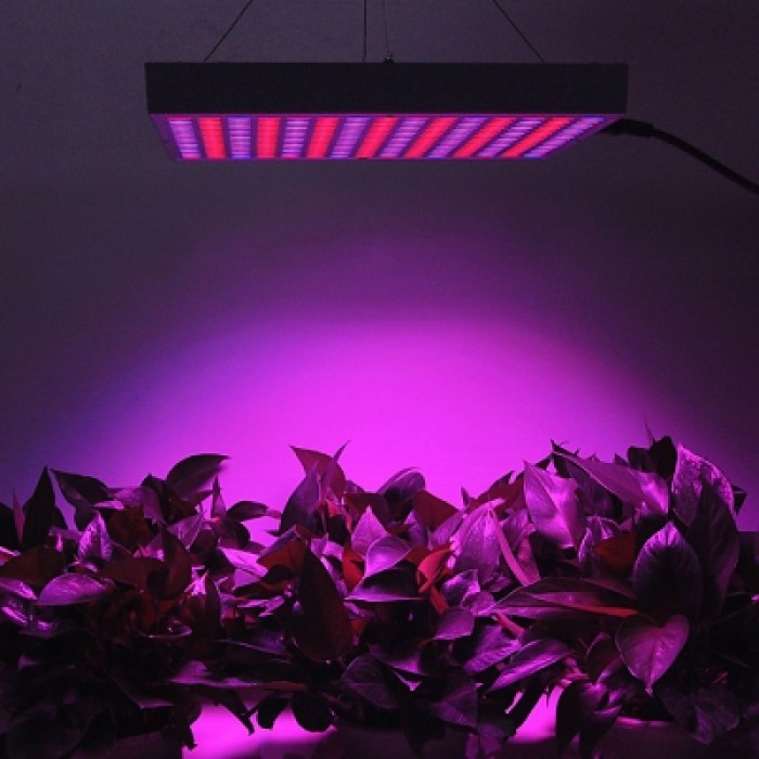 14W Red + Blue LED Plant Grow Light  ( EU Plug )